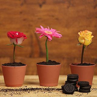 Flower-Pot Dessert