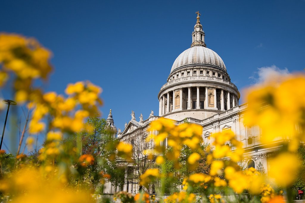 Bright yellow flowers popped up near St. Paul's Cathedral in London.