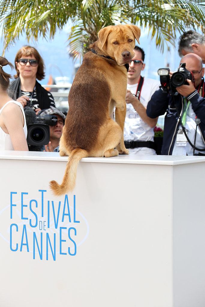 Hagen, the canine star of White God, had his own adorable photo shoot for the film.