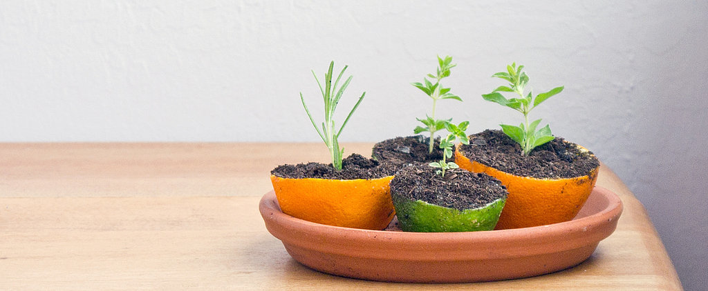 No Green Thumb Needed! DIY Citrus Rind Seed Starters