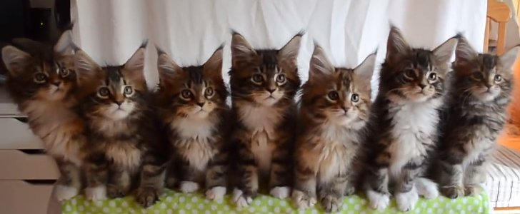 Seven Kittens Reacting to a Shiny Object Together Will Boggle Your Mind