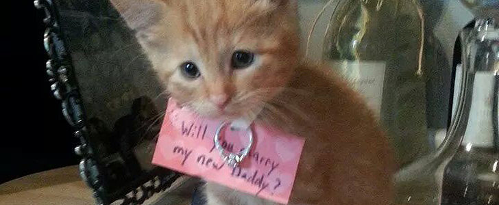 It's World Cat Day, So Naturally We're Looking at Kitten Proposals!