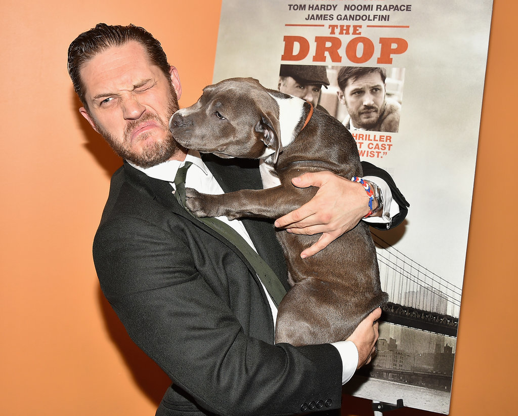 Tom Hardy With A Puppy At The Premiere Of The Drop