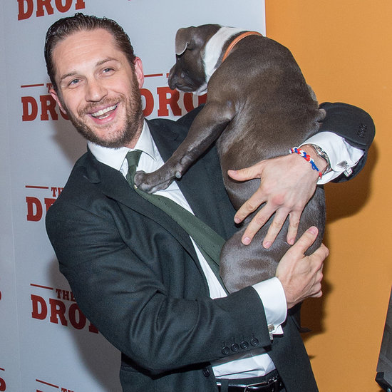 Tom Hardy With a Puppy at the Premiere of The Drop | Photos