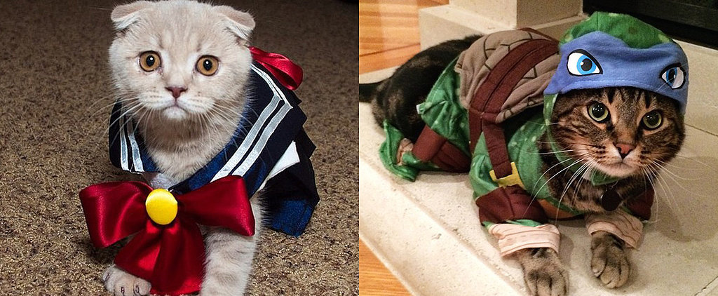 12 Cats That Have Paws-itively Mastered the Geeky Halloween Costume