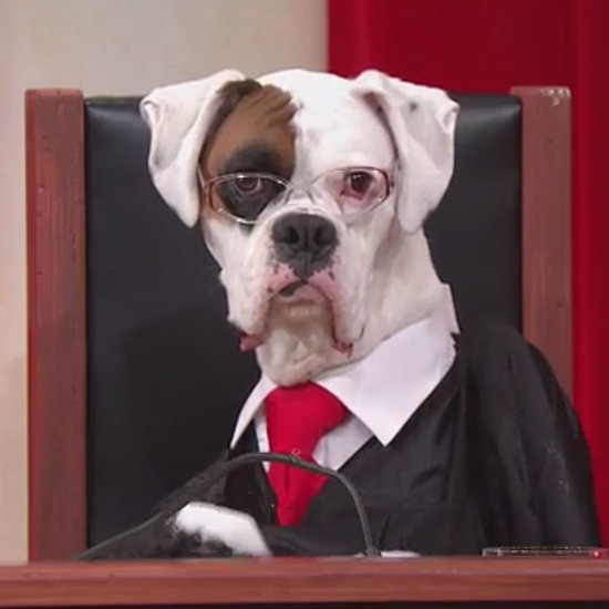 Supreme Court Reenactment With Dogs on John Oliver | Video