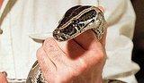 10 Invasive Animal Species in the United States