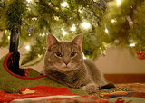 7 Holiday Hazards for Pets