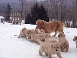 This Golden Retriever Family Transcends Any & All Winter Blues