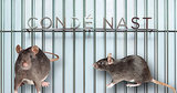So, There Might Be a Rat Infestation at Vogue