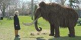 Effort To Clone Woolly Mammoth Takes Big Step Forward