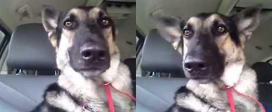 This Dog Has a Very Unique Way of Dancing to Flo Rida