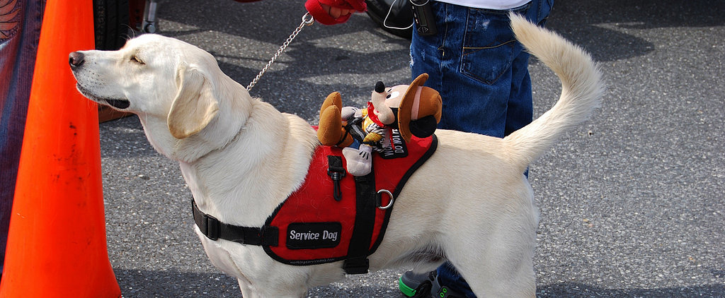 Massachusetts School Denies Boy His Service Dog