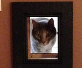 My Friend Made an Interior Cat Passageway With a Picture Frame