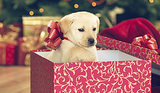 9 Reasons Why Pets Make Terrible Gifts