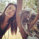 Celebrities With Koalas Pictures