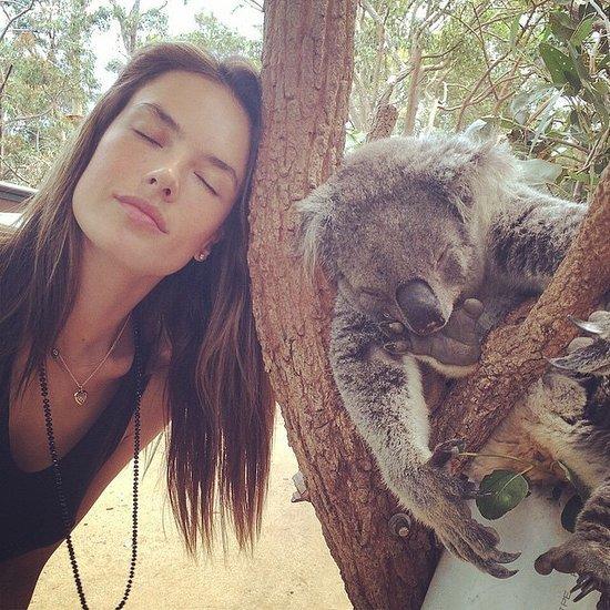 Celebrities With Koalas Pictures