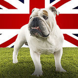 Dogs Are More Popular Than Ever In the UK -- But Shelters Are Still Full