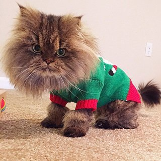 Pets Wearing Christmas Costumes