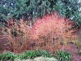 Color Sparks a Winter Landscape (10 photos)