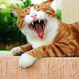 Cats Don't Get Cavities? Get the Facts on Tooth Resorption