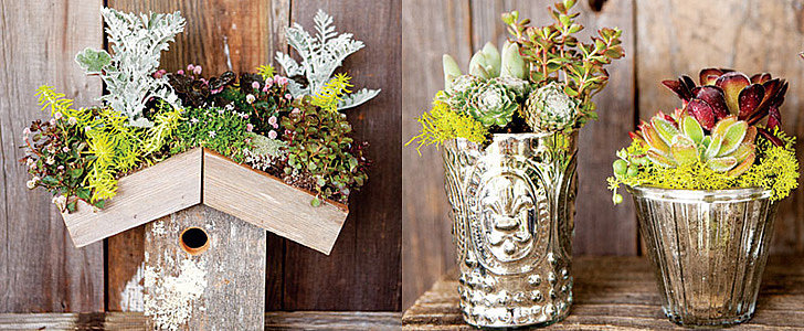 10 Stylish Ways to Decorate With Succulents