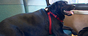The Public-Transportation-Savvy Dog You Have to See to Believe