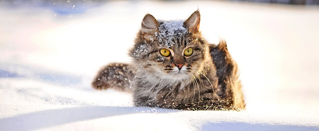 This Heroic Russian Cat Saved an Abandoned Baby From Freezing in the Streets