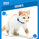The Catster 2015 Kitten Bowl Scouting Report