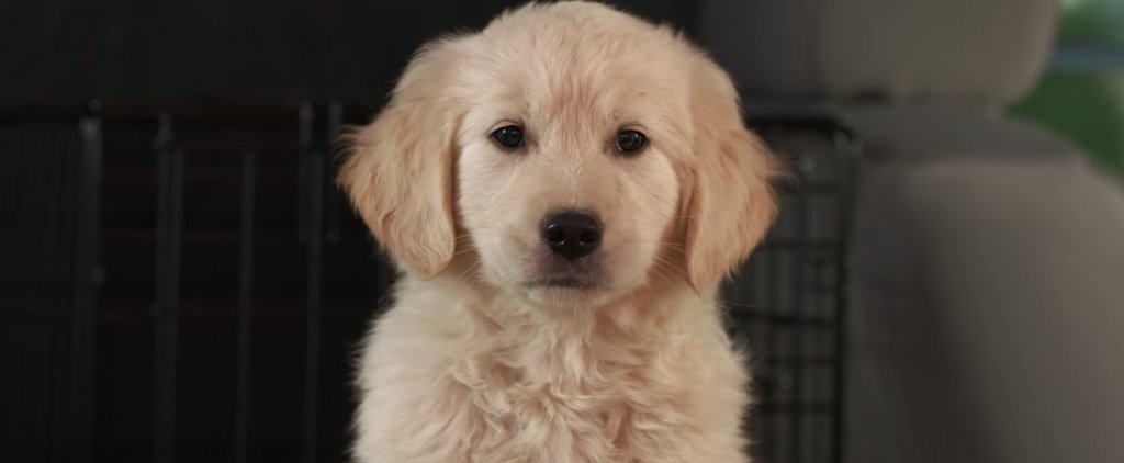 If You Love Puppies, Don't Watch This GoDaddy Super Bowl Commercial