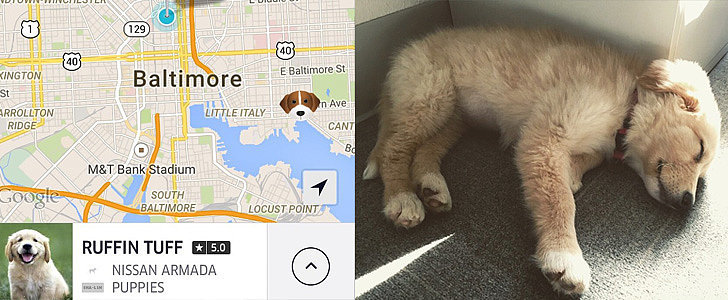 Need Puppy Snuggles? Call an Uber
