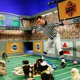 We Talk to Puppy Bowl XI Referee Dan Schachner