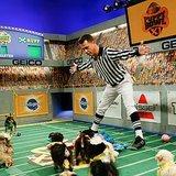 We Talk to Puppy Bowl XI Referee Dan Schachner