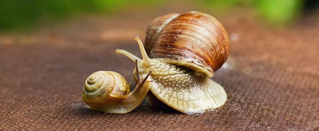 Snail Facials Are the Latest Trend in Antiaging