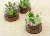 12 Tiny Terrariums You Can DIY For Earthy Wedding Centerpieces