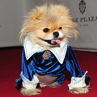 Lisa Vanderpump's Dog Giggy on Red Carpet