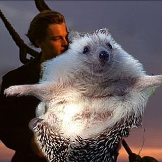 Biddy the Hedgehog Photoshop Pictures
