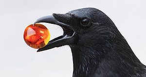 Magical 8-Year-Old Is Worshipped, Bestowed With Gifts by Wild Crows