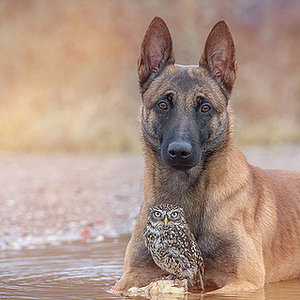 See the Beautiful Friendship Between a Dog and an Owl