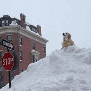 The Boston Area's Massive Snow Piles Are Putting Dogs in Danger