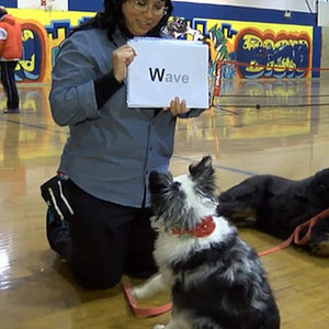 Mia the Australian Shepherd Can Read -- And She's Not the Only Dog Who Can