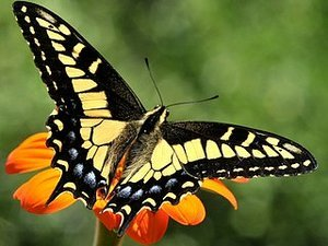 6 Easy Steps to Creating Your Butterfly Garden (14 photos)