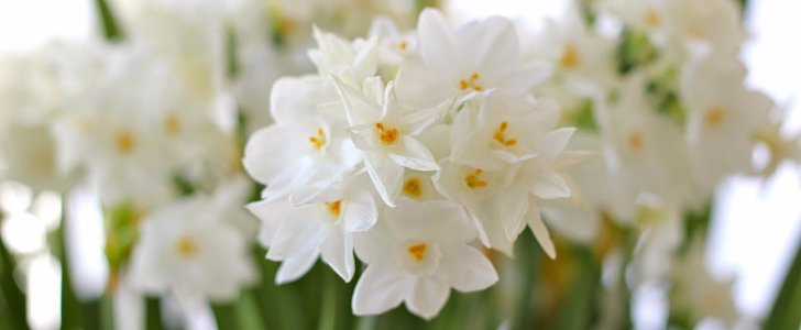 The Ultimate Guide to Forcing Spring Flower Bulbs