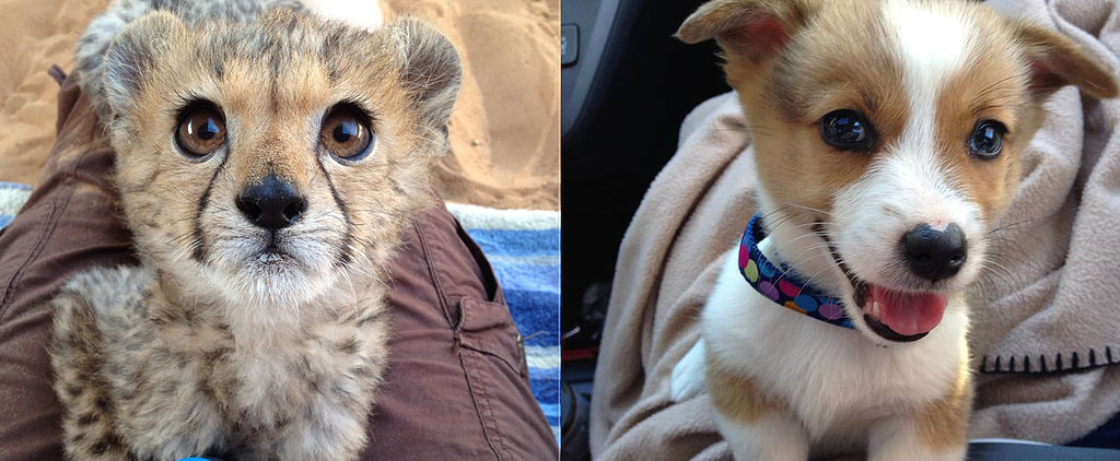 25 of the Cutest Animals We Ever Did See
