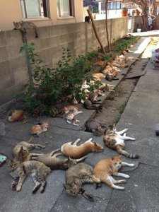 "Cats Rule Japan's Aoshima Island, Also Known as ""Cat Island"""