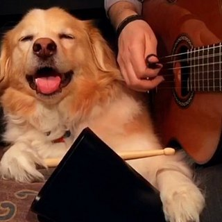 Maple the Dog Playing Instruments Video