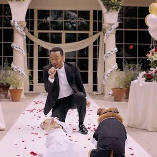 John Legend Singing in Dog Wedding | Video