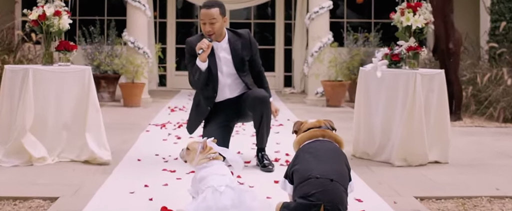 John Legend Gives His 2 Dogs the Wedding of a Lifetime