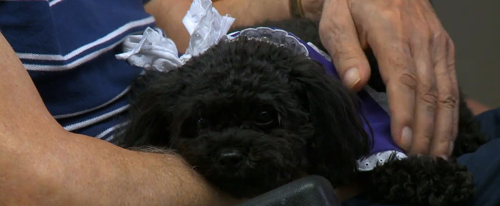This Teacup Poodle Visits Her Friends in the Nursing Home