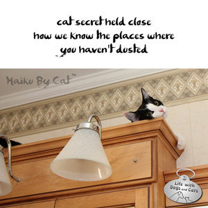 Haiku by Cat: 5 Celebrations of International Haiku Poetry Day